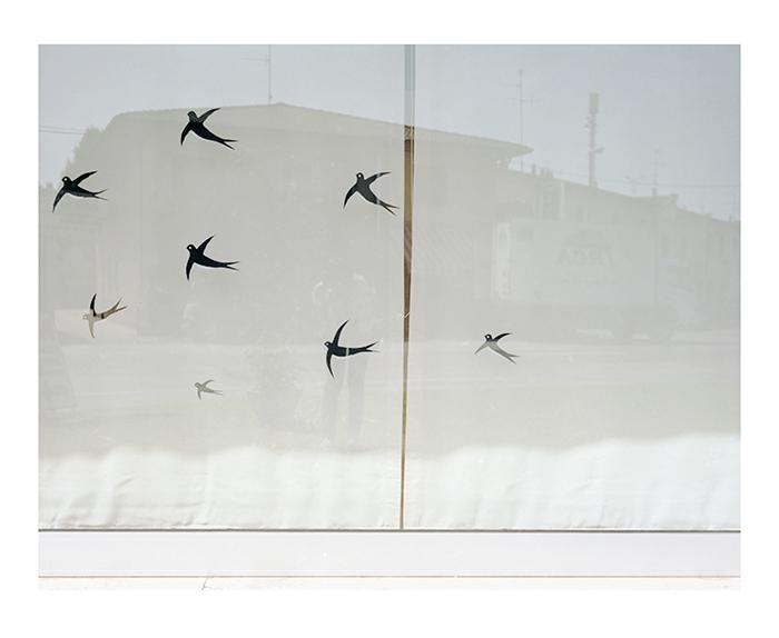 "Francesca Gardini ""Ieri, oggi, domani_dopo natura"" 2012"